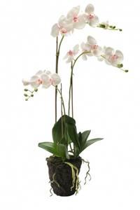 Bilde av Kunstig Orkide Rosa i Jord 75cm