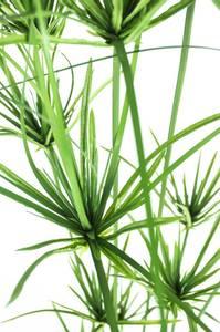 Bilde av Kunstig Cyperus Papyrus 140cm