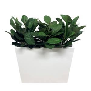 Bilde av Komplett Plantekasse - 3 stk Gummiplanter